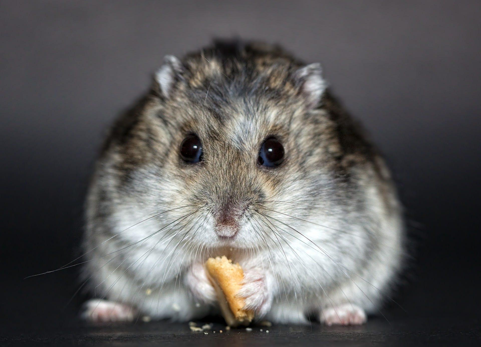 my hamster wheel is