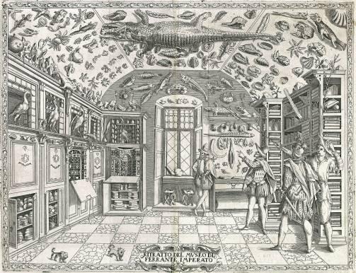 Os gabinetes de curiosidade e o Renascimento | by Mouseion: Museus em Foco  | Museus e Museologia | Medium