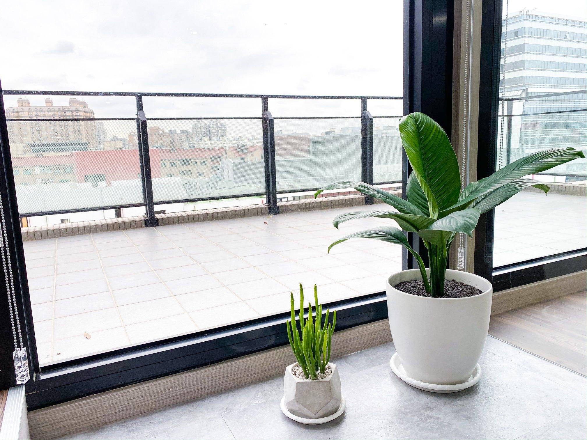 【淨化空氣又好養的9大類室內植物!連NASA也推薦!】. 不知道該怎麼挑選淨化空氣的植物嗎?超詳細整理讓你 ...