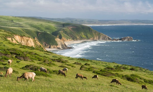 Point Reyes by Land and by Sea. Where Holsteins, herons, and hidden…   by Rachel Levin   Airbnb Magazine   Medium