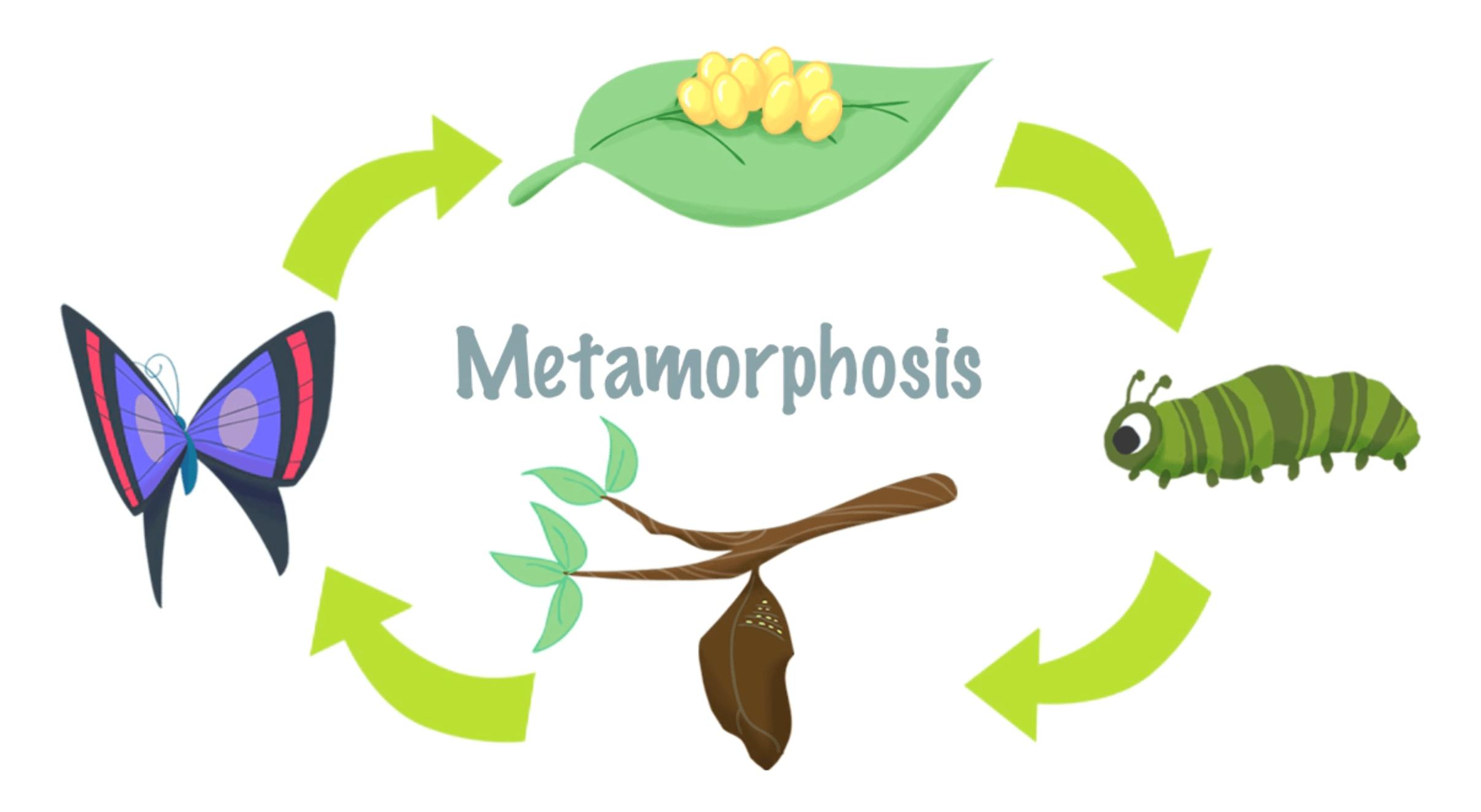 Mini Lesson Plan Metamorphosis
