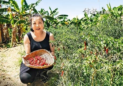 香港製造 自種自釀辣醬 - 信報財經新聞 HKEJ - Medium