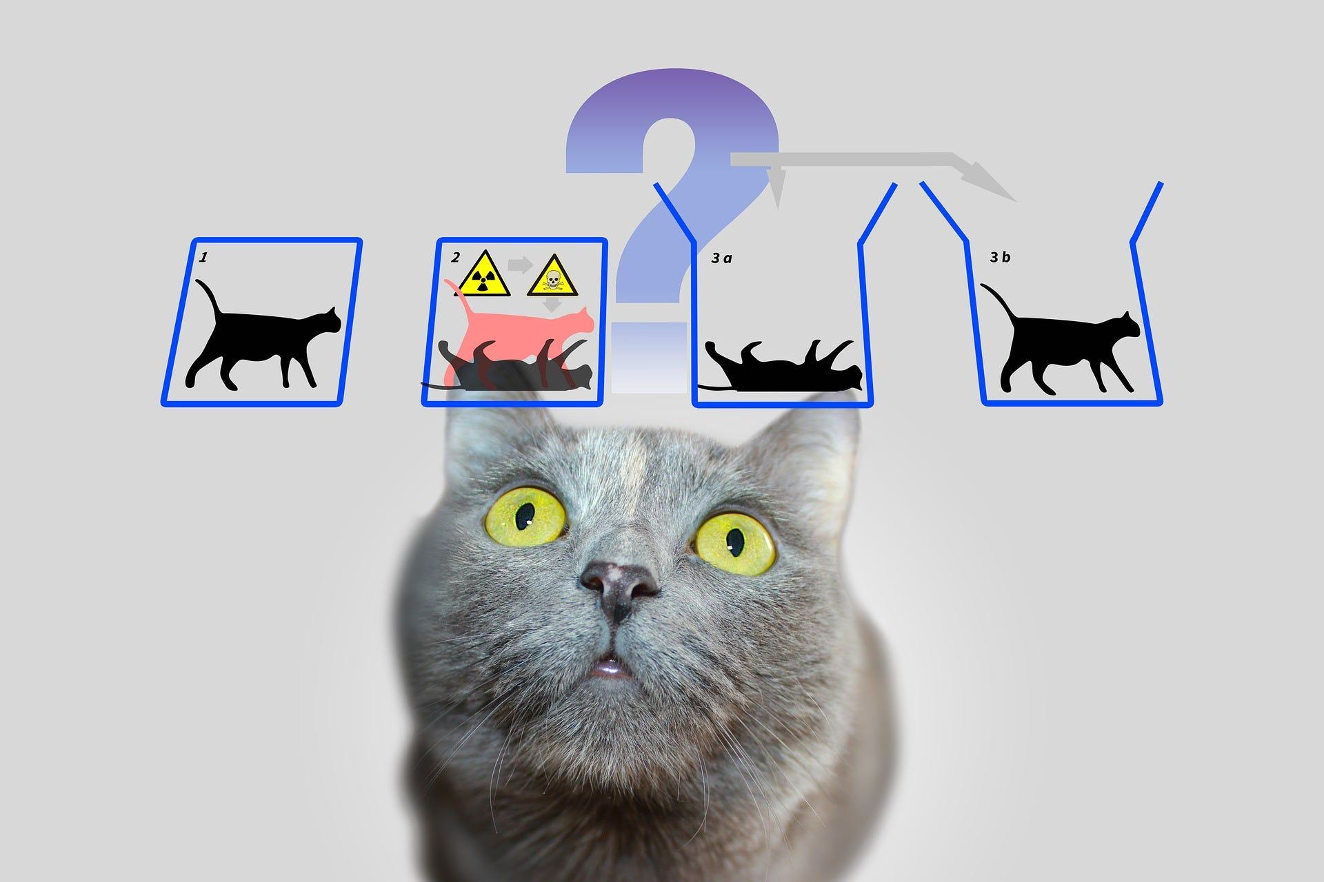 how schrodinger s cat