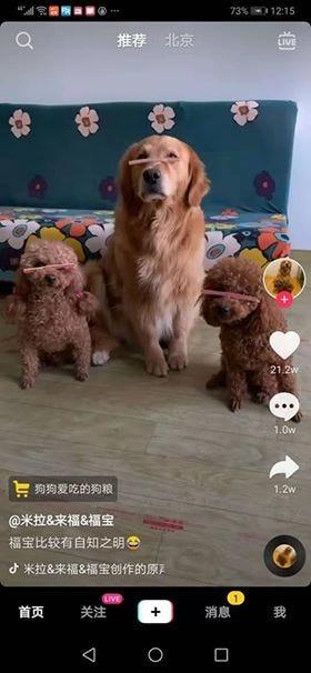 Скриншот китайского аналога TikTok: видео с тремя собаками