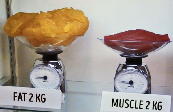 But muscle is heavier than fat, right? | by Juliette Norman |  LifestylesFitness | Medium