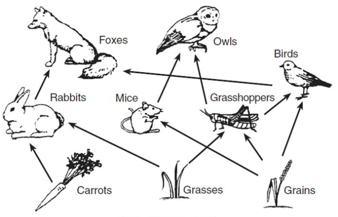 Explain to Kids: Food Chains. Every living thing is unique