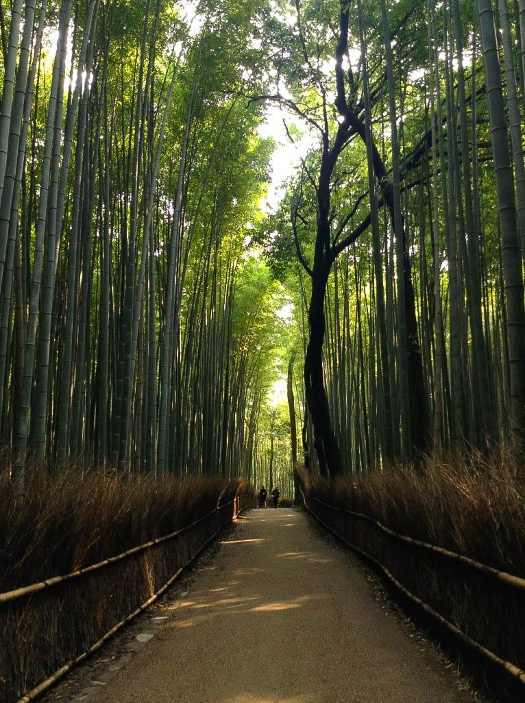 arashiyama forest kyoto