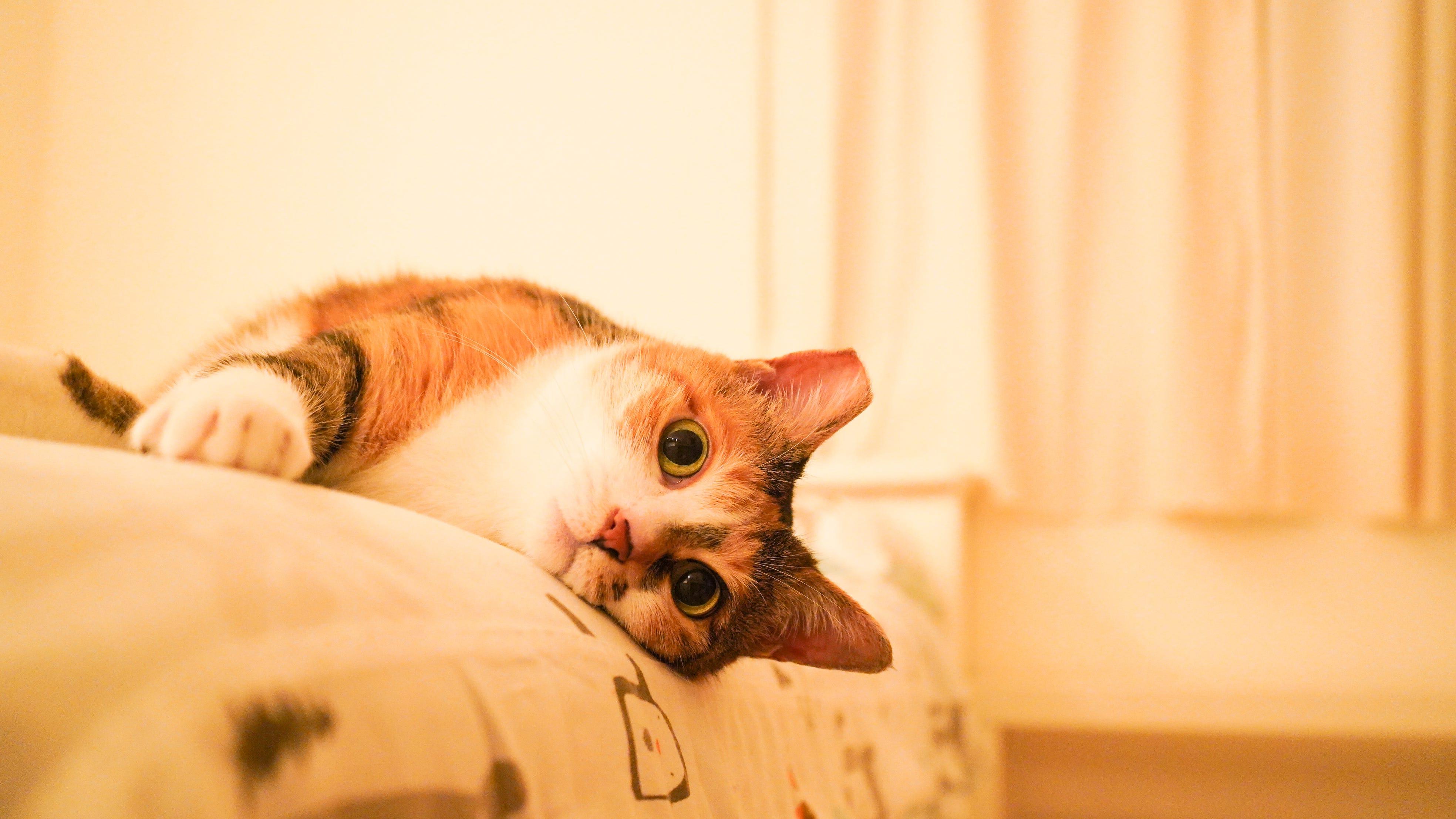 陪貓咪一起治療小腎臟. 貓咪腎病 腎臟病 腎病治療 肌酸酐 血中尿素氮 SDMA   by 養貓之後日日一身毛   Medium