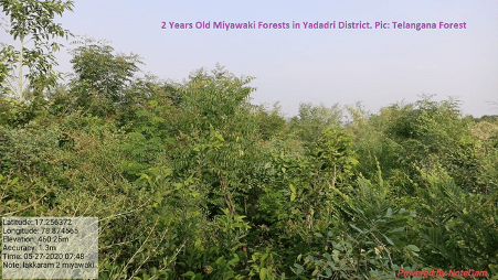 It is a technique pioneered by japanese botanist akira miyawaki, that helps build dense, native forests and ensures plant growth 10 times faster and 30 times denserthan. Miyawaki Way To Green Urban Landscapes And Degraded Forests By Mohan Chandra Pargaien Climate Conscious Medium