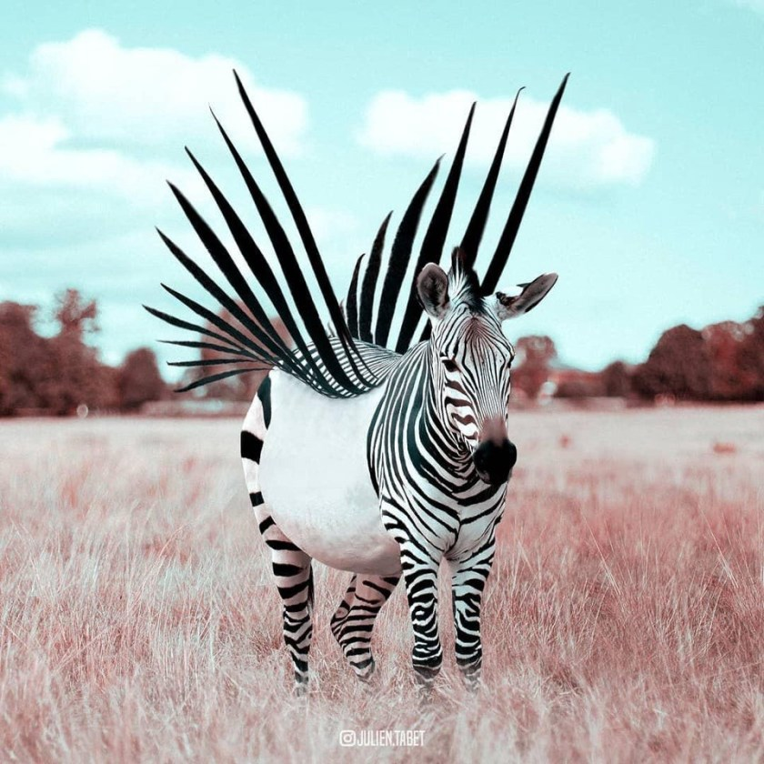 Meetup to the People: How a Zebra could Rise from a Unicorn's Fall