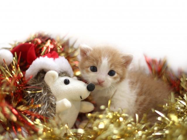 ぬいぐるみクリスマス