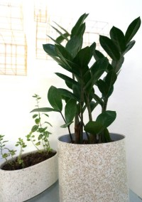 Modern indoor potted plants