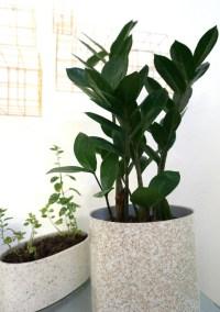 Modern indoor potted plants