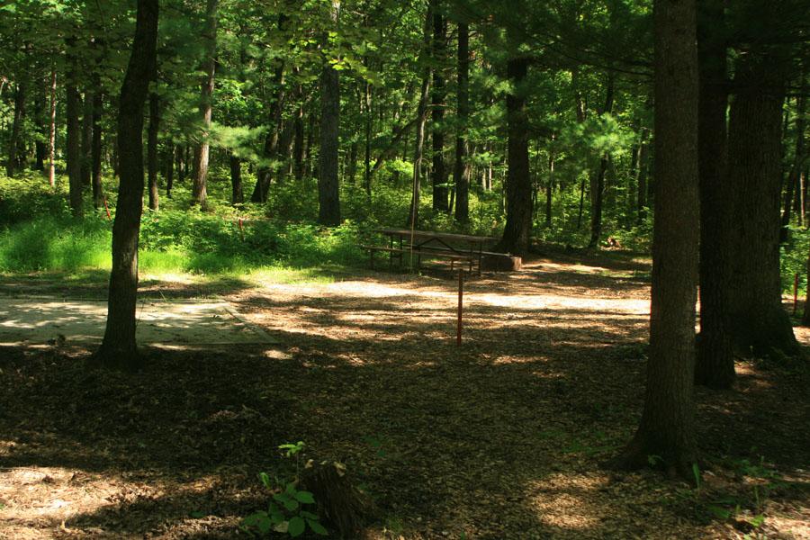 Site 203