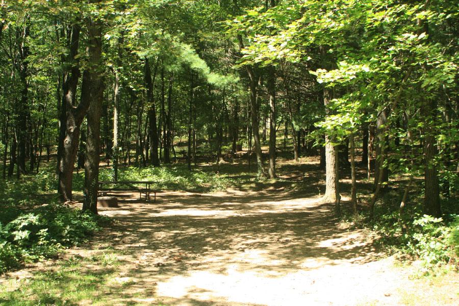 Site 89