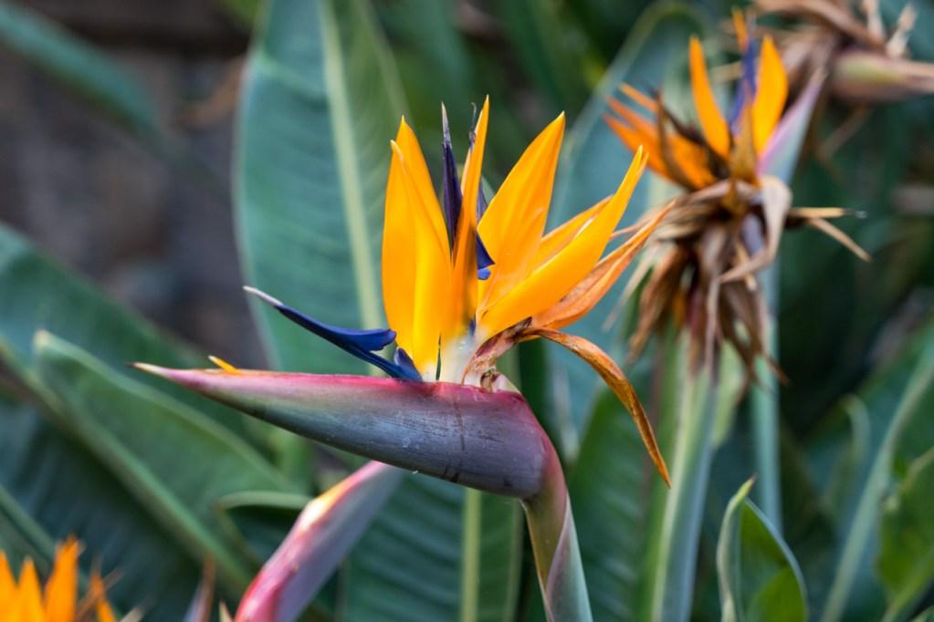 Eine Blume im Park von Garachico