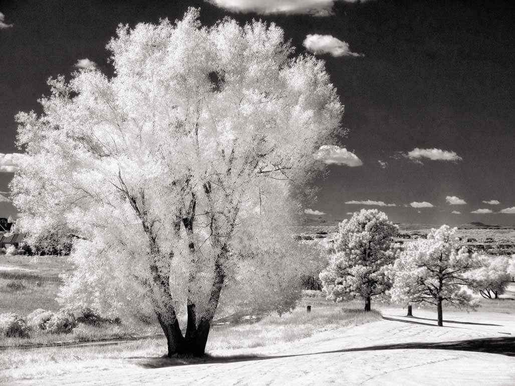 Focusing in Infrared Photography