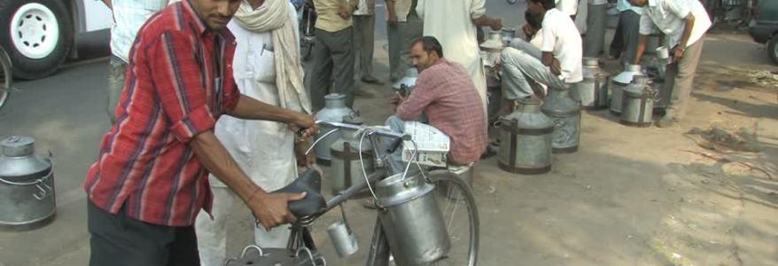 उत्तराखंड : मिलावटी दूध में लगाम लगाने में सरकार असफल, आरटीआई के जरिए हुआ खुलासा