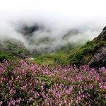 1 जून से पर्यटकों के लिए खुलेगी फूलों की घाटी, पढ़िए कैसे पहुचें
