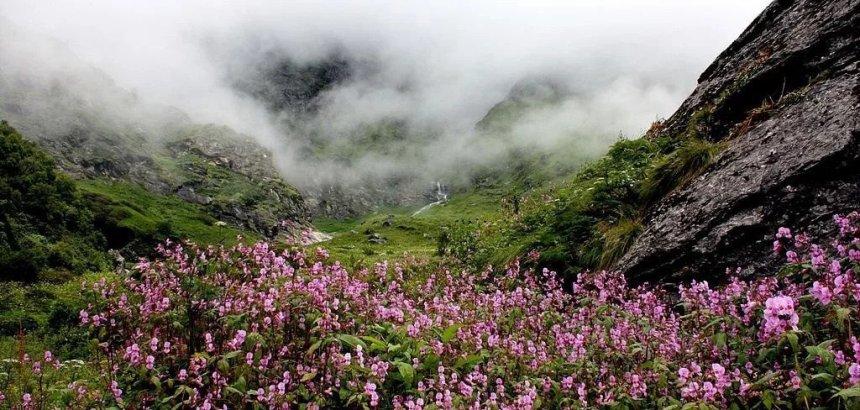 Uttarakhand खुल गई प्रसिद्ध फूलों की घाटी, पर्यटकों की आवाजाही पर अभी रोक