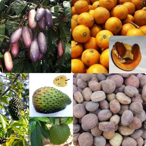 Haiku: Dreaming Of Exotic Fruits...