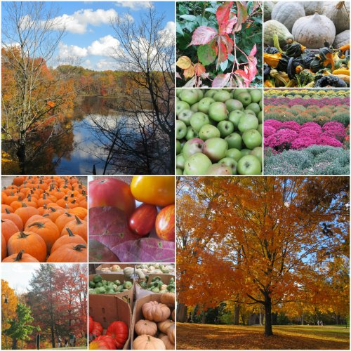 Weekly Photo Challenge: Changing Seasons... Fall
