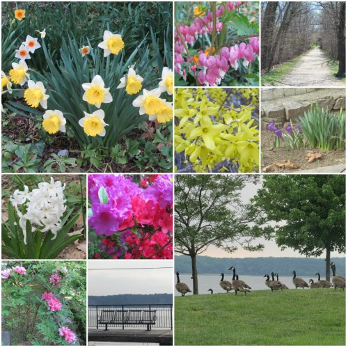 Weekly Photo Challenge: Changing Seasons... Spring has sprung