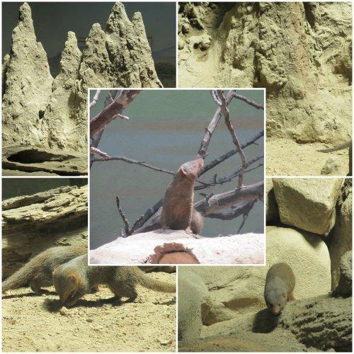 Weekly Photo Challenge: Home... Mongoose Home