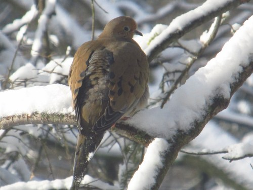 Wintering bird in our year