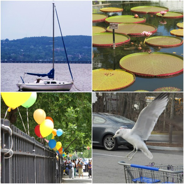 Weekly Photo Challenge: AFLOAT... boats and birds and pods and balloons floating