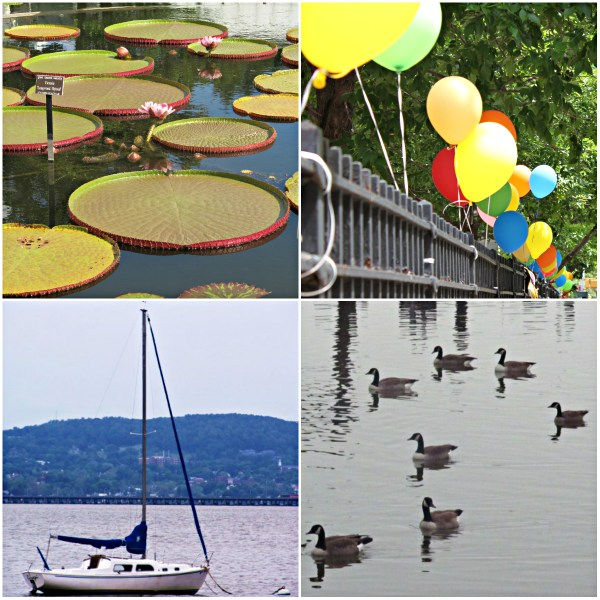 Weekly Photo Challenge: AFLOAT... lotus pads, a boat, balloons, and ducks in a pond