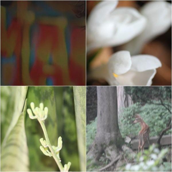 Weekly Photo Challenge: BLUR - Life Shots