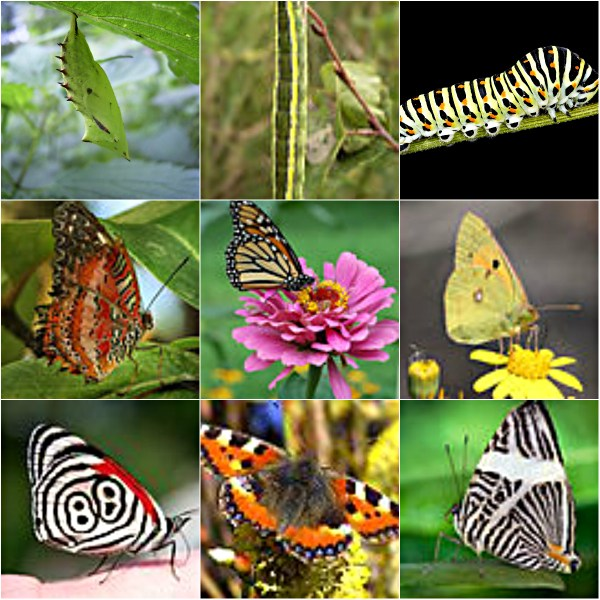 Motivation Mondays: GROWTH - Butterfly stages of growth