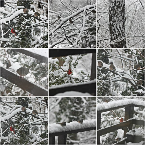 Weekly Photo Challenge: Forces of Nature - Birds in a Snowstorm