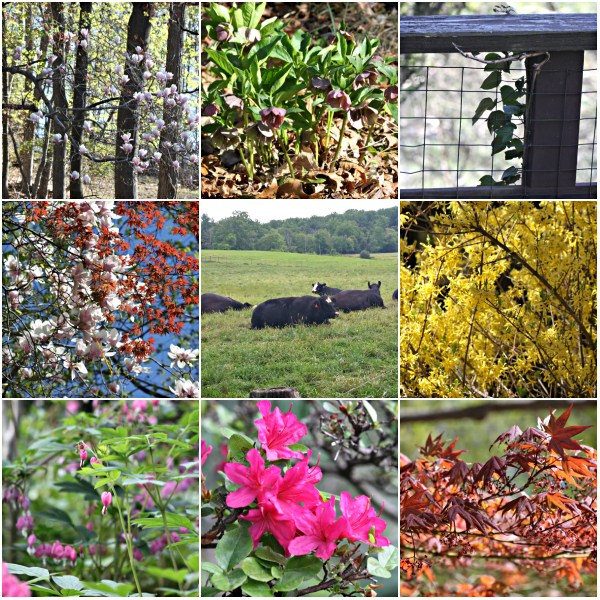 Weekly Photo Challenge: OFF-SEASON -  In Season Garden and Farm in contrast.