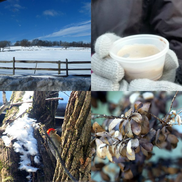 Weekly Photo Challenge: OFF-SEASON -  Quiet Farm and wintry moments