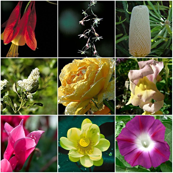 Motivation Mondays: SIMPLICITY - flora in bloom