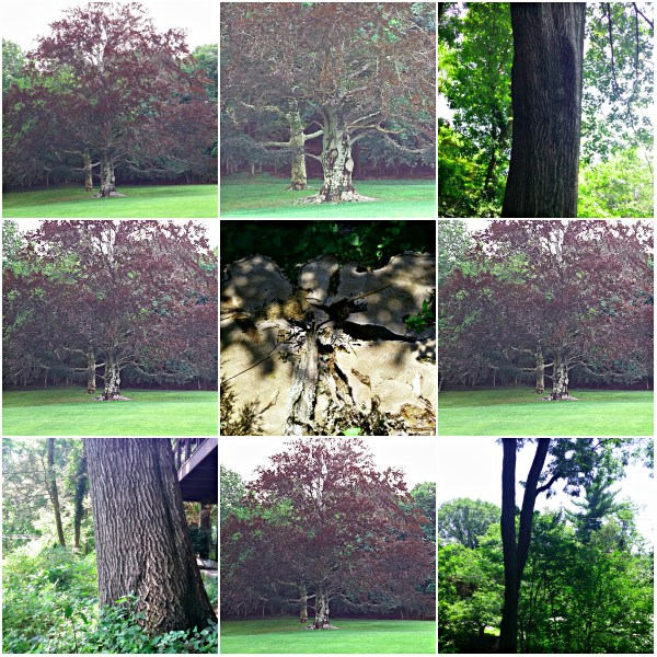 Weekly Photo Challenge: SYMBOL - TREES