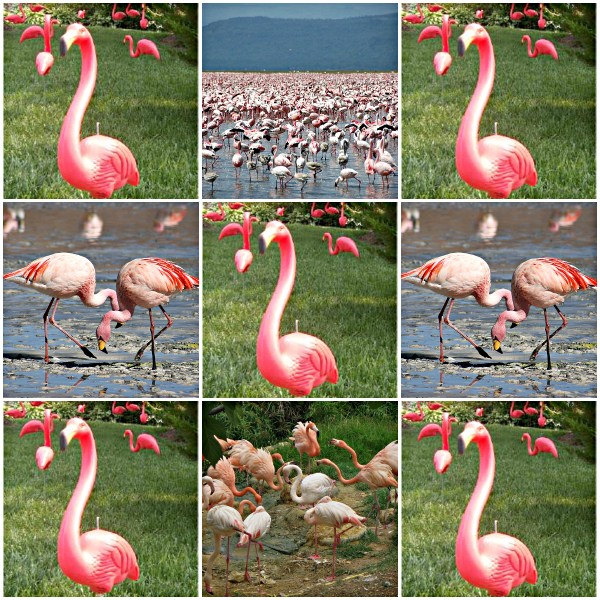 Pink Flamingos: A Preposterous Story