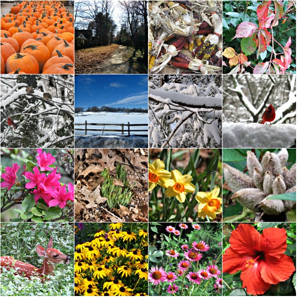 Weekly Photo Challenge: CHANGE - The Four Changing Seasons - Autumn/Winter/Spring/Summer