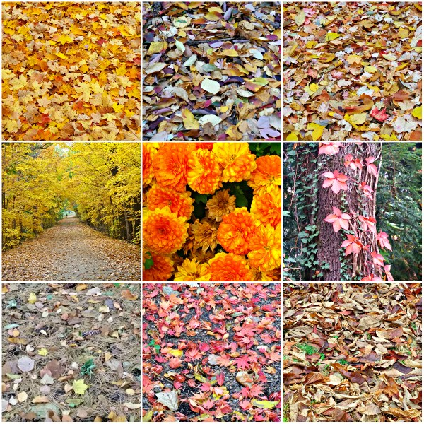 Weekly Photo Challenge: VICTORY - Fall Foliage and Colors are a Victory of Nature