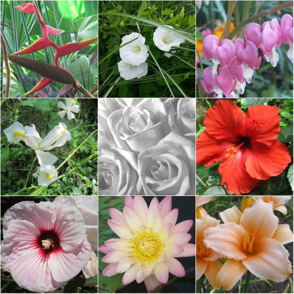 Weekly Photo Challenge: Life Imitates Art - Imitating O'Keeffe's Florals