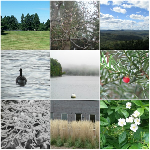 Weekly Photo Challenge: SPARE - A collage of spare spaces, subjects and scenery