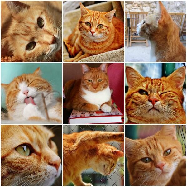 Haiku: OPENING LINE... Cat Talk & Conversations
