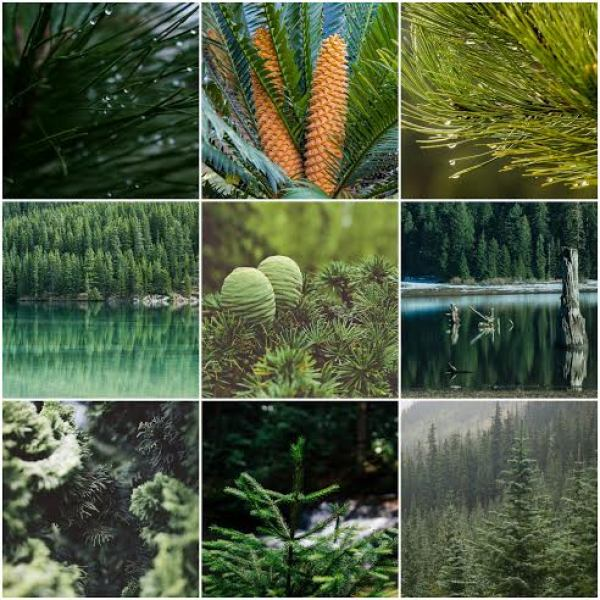 Evergreen Content: Creating For Posterity - Timeless, Quality, Fresh...