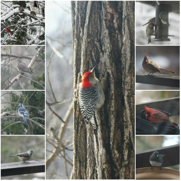 Weekly Photo Challenge: RESILIENT - like the birds of the air...