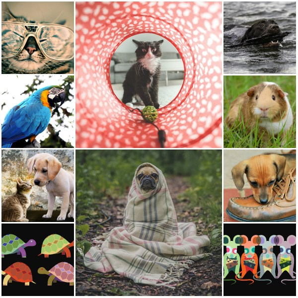 Motivation Mondays: Top Twenty Lessons Pets Teach Us