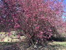 Hacia el equinoccio de primavera