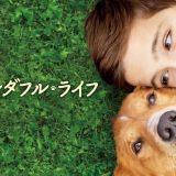 映画『僕のワンダフル・ライフ』あらすじ・ネタバレ感想!