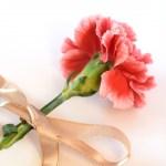 卒園式で花を一輪ずつ渡す際の花や相場は?ラッピングの費用は?